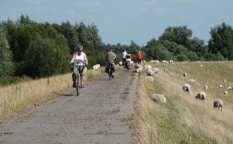 Fietsers en schapen op Beverpad